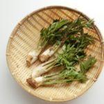 【趣味】北海道の山菜採り時期は何月!?
