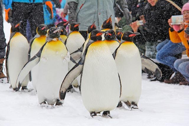 北海道旅行 旭山動物園