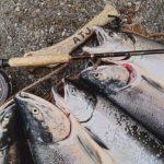 アキアジ釣りで購入する物、釣れるポイントはズバリここ