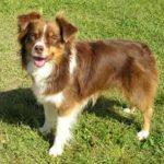 犬の性格と特徴「エ・オ」から始まる名前