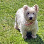 犬の性格と特徴「ウ」から始まる名前