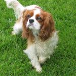 犬の性格と特徴「カ・キ」から始まる名前