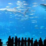 沖縄の観光スポットと見学時間|北部地方
