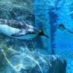 旭山動物園に行くのに近くて安いホテルや宿泊施設