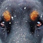 犬の目の病気は最悪失明するかも!