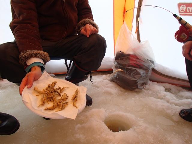 東北ワカサギ釣り