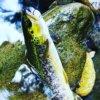 渓流釣りトラウトロッド選び|3,000円以内で購入できる釣り竿